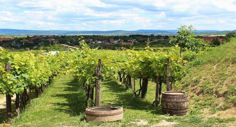 Hungary Etyek wine region with wine tasting near Budapest